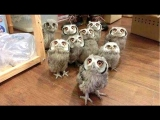 Owl – A Funny Owls And Cute Owls Compilation