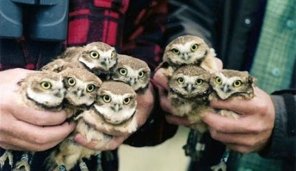 Owl Dancing – Funny Owls And Cute Owl Videos Compilation 2016