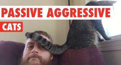 Passive Aggressive Cats Video Compilation 2016