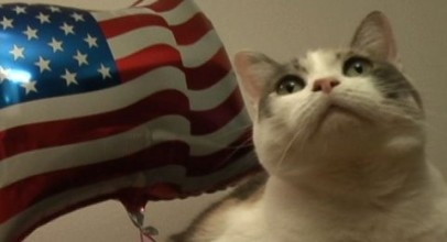 Patriotic Cats Celebrate The 4th Of July