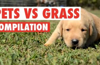 Pets vs Grass Funny Pets Compilation 2016