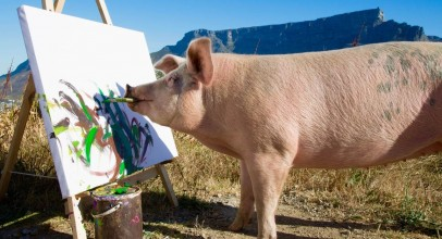 Pig Saved From Slaughter Becomes An Artist