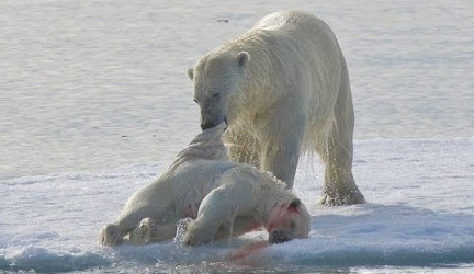 Polar Bear. Cruel Survival Polar Bear – Documentary Films 2017 / Amazing Animals