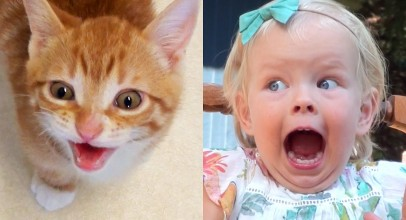 Proof That Cats Are Basically Toddlers