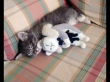 PROOF THAT CATS ARE THE BEST!!! – Cats That Like Hugs Compilation Video