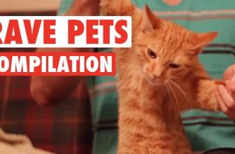 Rave Pets Funny Pet Compilation