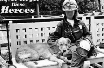 Rescue Dogs from 9-11
