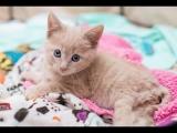 Rescuing Chloe, a Paralyzed Kitten