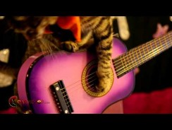 Rock Cats NEW Music Video 3/16/2014