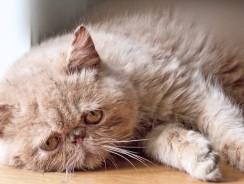 Sad Cat Diary Video