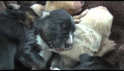 Saving 15 Dogs in 15 Minutes… See How We Did This