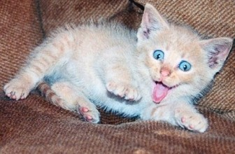 Scared Cats The Best Funny Cat Videos