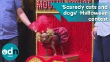 'Scaredy cats and dogs' dress up for Halloween contest