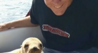 Sea Lion Pup Jumps On Boat, Cuddles With Driver