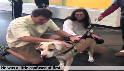 Shelter Dog Has No Idea His New Family Is Waiting Outside