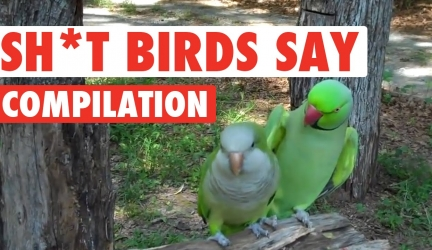 Sh*t Birds Say Video Compilation 2016