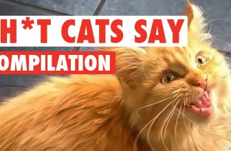 Sh*t Cats Say Video Compilation 2016