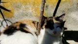 Sleepy Cat In The Sun