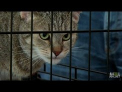 Snickers the Cat's Follow-Up | My Cat From Hell
