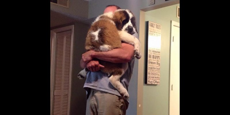 Soo Cute! Cats and dogs wants to be held like baby Video