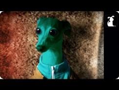 Star Wars Parody – Paw Warz – Haz Definitely Shot First Scene
