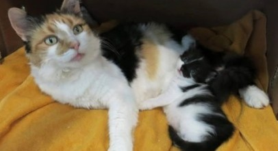 Stray Cat Begs Family to Take Her in So She Can Keep Her Only Baby Safe