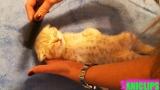 Super Cute Kitten Sleeping Video