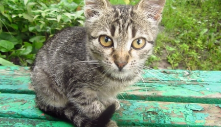 Tabby kitten on the bench