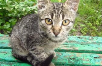 Tabby kitten on the bench
