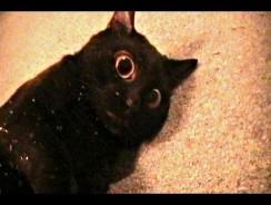 Talking Kitty Cat 7.5 – Sylvester's Catnip Overdose