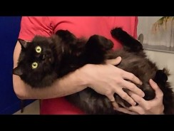 The 3 Most Important Ways to Enrich Your Cat's Life