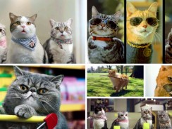 The Best Most Funny Cats in Commercials Video