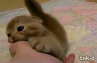 The cutest kittens ever !!! (compilation)