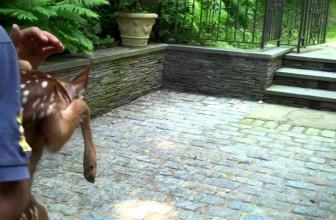 The Deer Walks Off