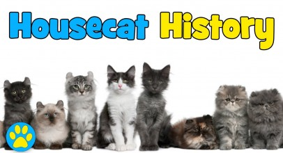The History Of Housecats