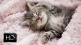 The Laziest Kitten Ever