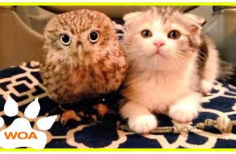 The Owl And Kitten Friendship Top Video Channel Compilation Top Video