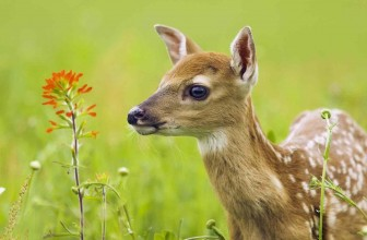The Private Life of Deer – Amazing Nature Documentary (HD)