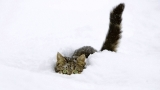 The Ultimate Funny Cats Discovering and Playing in Snow Compilation
