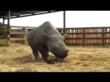 There's a Rhino in My House – Part 1 of 4