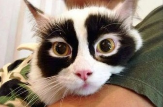 These 40 Cats Have The Most Beautiful and Unusual Fur Patterns In The World