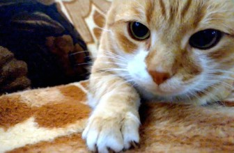 Things Cats Do Without Realizing They Are Being Adorable Video