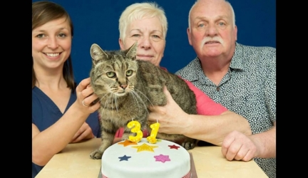 This 31-Year-Old Cat Is Probably The Oldest In The World, Yet Still Has Many Lives Left