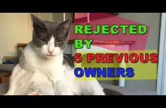 This Adorable Cat Was Rejected By 5 Previous Owners, You Know Why?