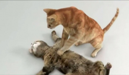Top 10 Funny Cat Acting Like Human (Funny Commercials)