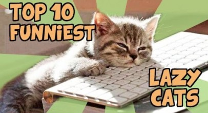 TOP 10 LAZIEST CATS OF ALL TIME