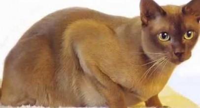 Top 10 Most Friendliest Cat Breeds