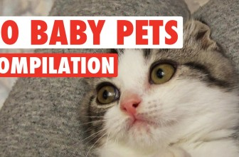 Top 30 Adorable Baby Pets Video Compilation 2016
