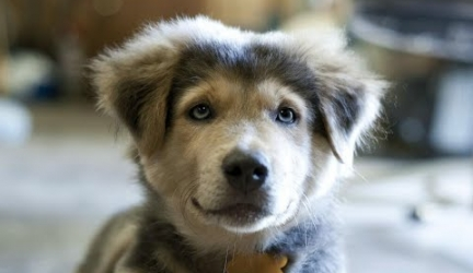 TOP 5 Most Beautiful Dog Breed Mixtures