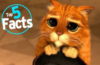 Top 5 Paw-sitive Facts About Cats